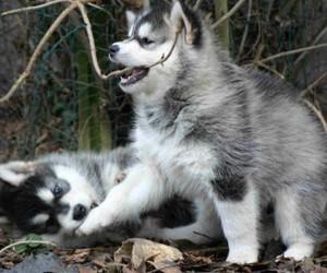 adorable, amazing, and animals image