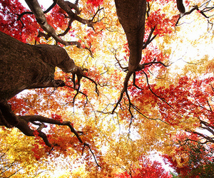 autumn, branches, and leaves image