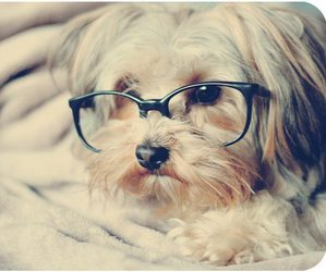 :3, hipster, and perro con lentes image