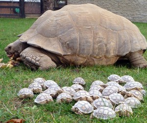 turtle, animal, and baby image
