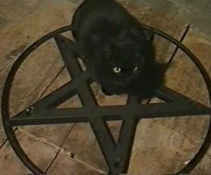 cat, pentagram, and satan image