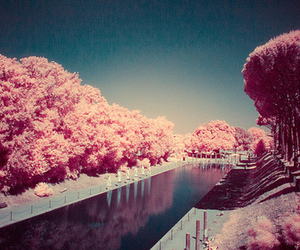 pink, tree, and landscape image