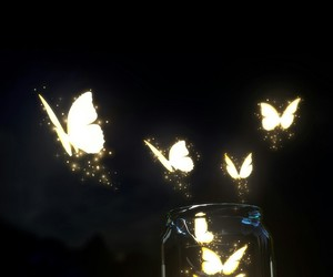 butterfly, wallpaper, and night image