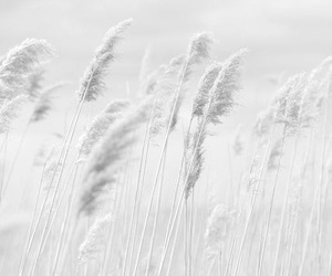 black and white, nature, and wind image