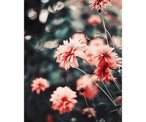 Image by sav♡