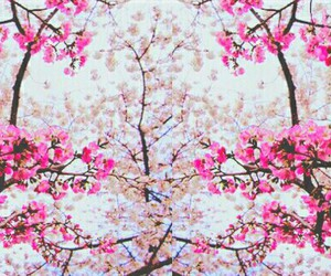 flower, pink, and sky image