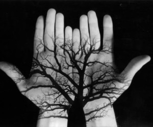 tree, black, and hands image