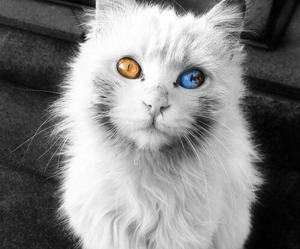 blue eyes, cat eyes, and color image