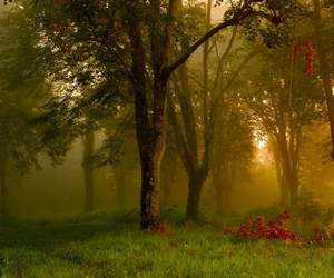 autumm, forest, and sunset image