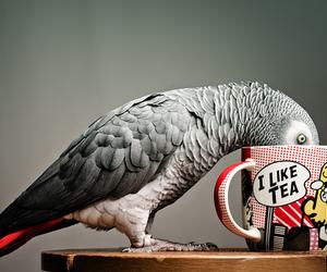 tea, bird, and parrot image