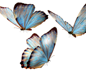 blue, butterfly, and overlay image