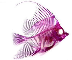 fish, pink, and purple image