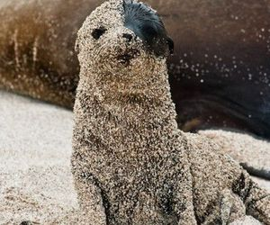 eye patch, fuzzy, and seal pup image