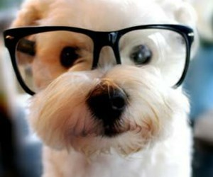 dog, cute, and glasses image