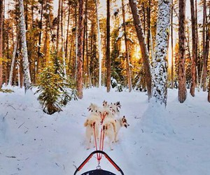 dogs, forest, and snow image