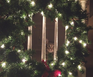 cat, holidays, and christmas image