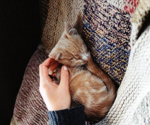 cat, indie, and kitten image