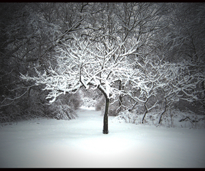 cold, frost, and snow image