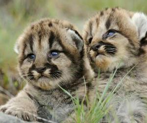 blue eyes, little, and cute animals image