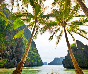 beach, paradise, and palm trees image