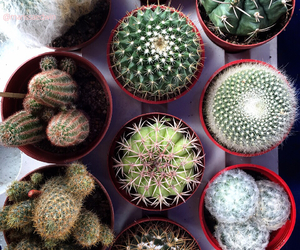 cacti, cactus, and clear image