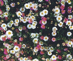<3, flowers, and grunge image