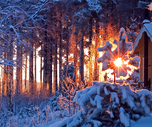 light, sun, and sweden image