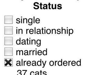cats, Relationship, and status image