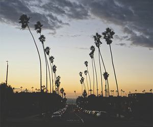 sunset, palm trees, and summer image