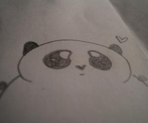 panda, panda bear, and cute image