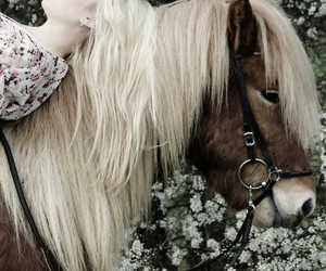 horse and soul image