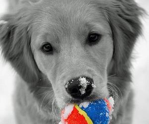 dog, ball, and snow image