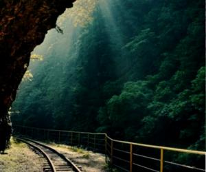 nature, sun, and train image