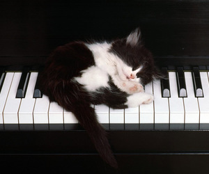 black white, music, and sleepy image