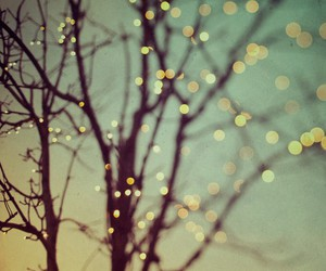 branches, trees, and tree lights image
