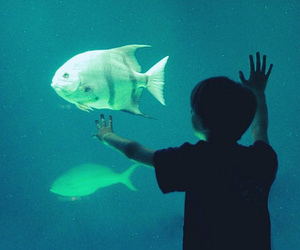 fish, aquarium, and boy image