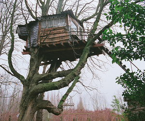 photography and treehouse image