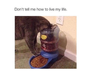 cat, funny, and food image