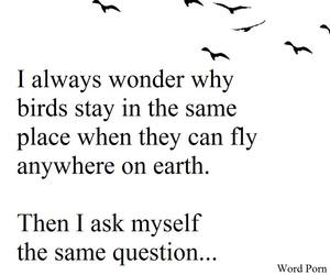 birds, freedom, and quote image