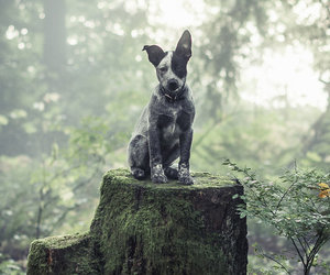 dog, hipster, and nature image