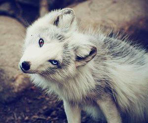 wolf, animal, and eyes image