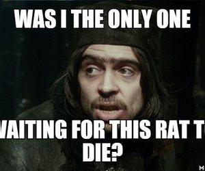 fact, hobbit, and rat image