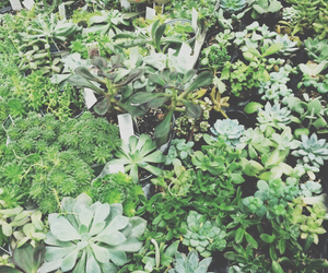 artsy, green, and plants image