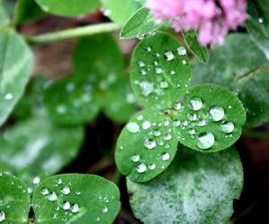 drops, green, and pink image
