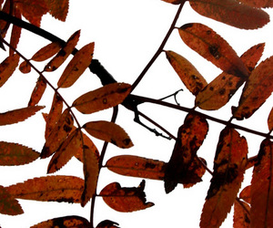 leafs and autumn image
