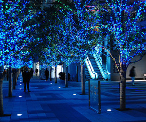 blue, light, and tree image