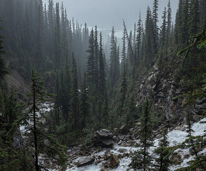 forest, mountains, and snow image