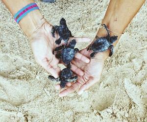 beach, sand, and turtles image