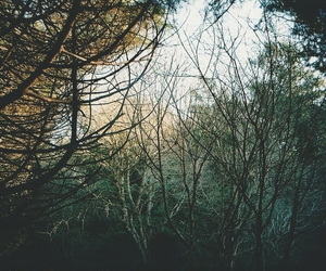 indie, nature, and photography image
