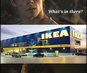funny, newt, and thomas image